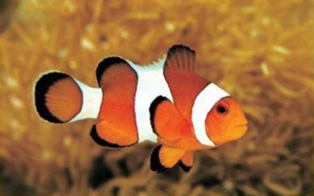 Clownfish скачать русскую версию