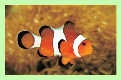 Clownfish for Skype: Free realtime language translator  download