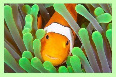 Clownfish на русском